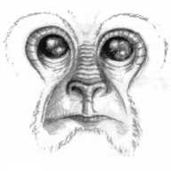 Noble Ape Simulation free download for Mac