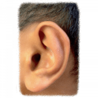 Dolce Ear Training free download for Mac