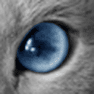 Cat_Invisible free download for Mac