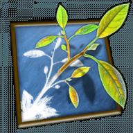 MindNode Lite free download for Mac