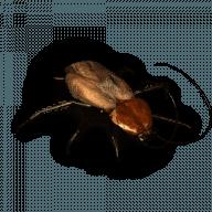 Pandora's Pests free download for Mac