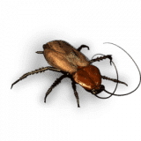 Pandora's Pests