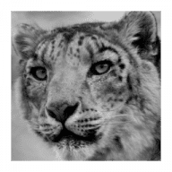 Snow Leopard Compatibility Checker free download for Mac