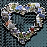 cf/x contour collage