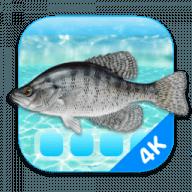 Aquarium 4K free download for Mac