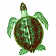 SeaTurtle free download for Mac