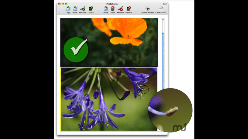 PhotoCuller for Mac - review, screenshots
