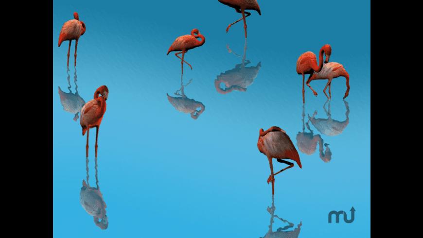 3D Flamingos for Mac - review, screenshots