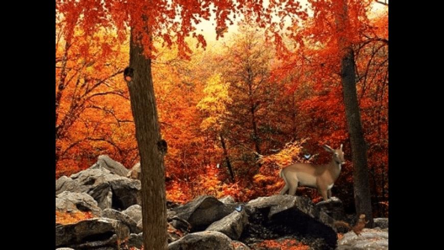 3D Autumn Woods for Mac - review, screenshots