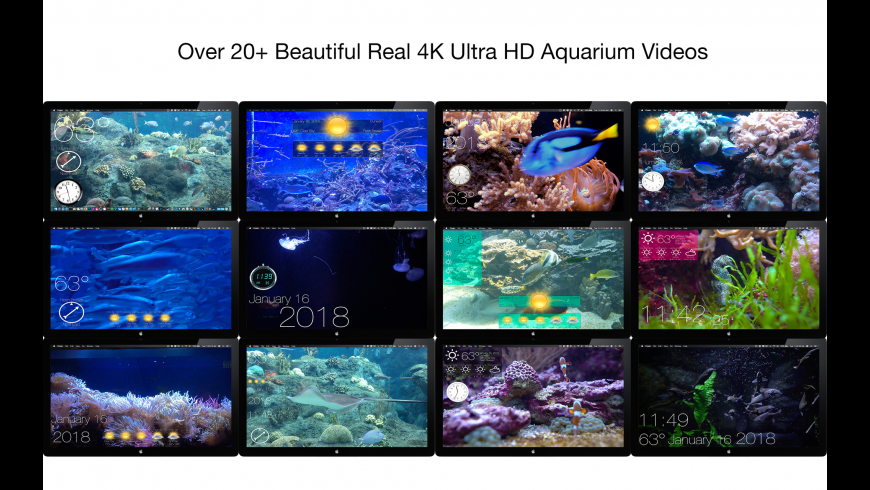 Aquarium 4K for Mac - review, screenshots