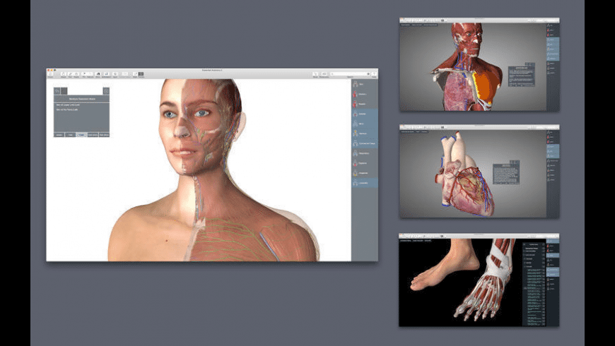 Essential Anatomy for Mac - review, screenshots