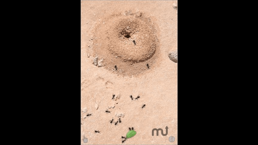 Ant Life for Mac - review, screenshots