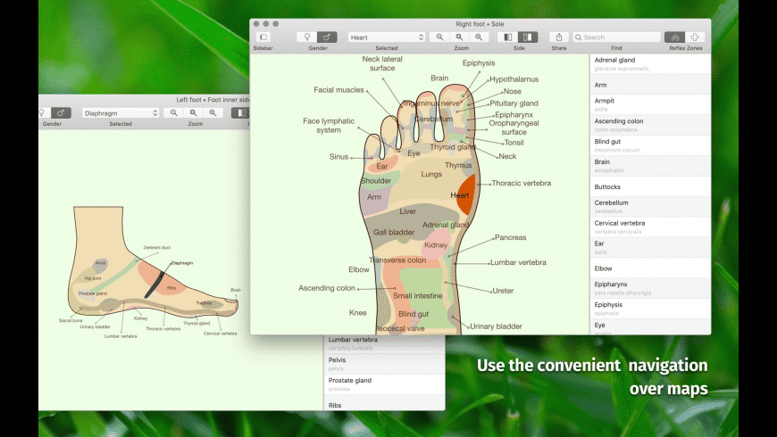 Massage Maps for Mac - review, screenshots