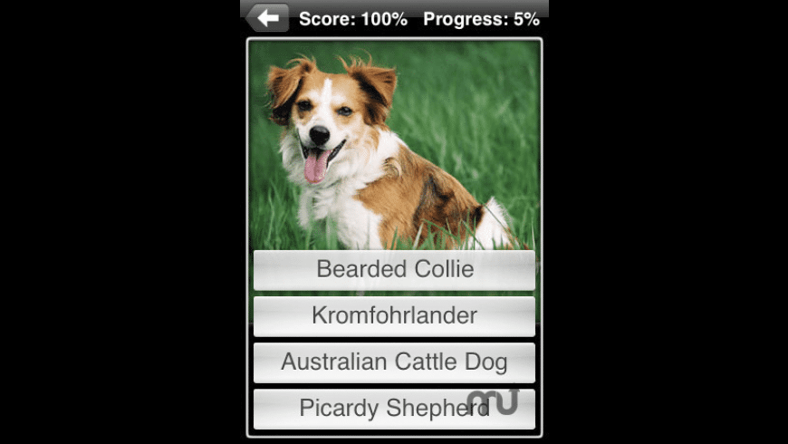 Dogs for Mac - review, screenshots