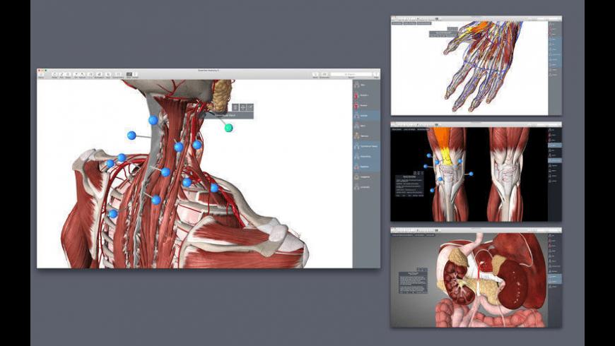 Essential Anatomy for Mac - review, screenshots
