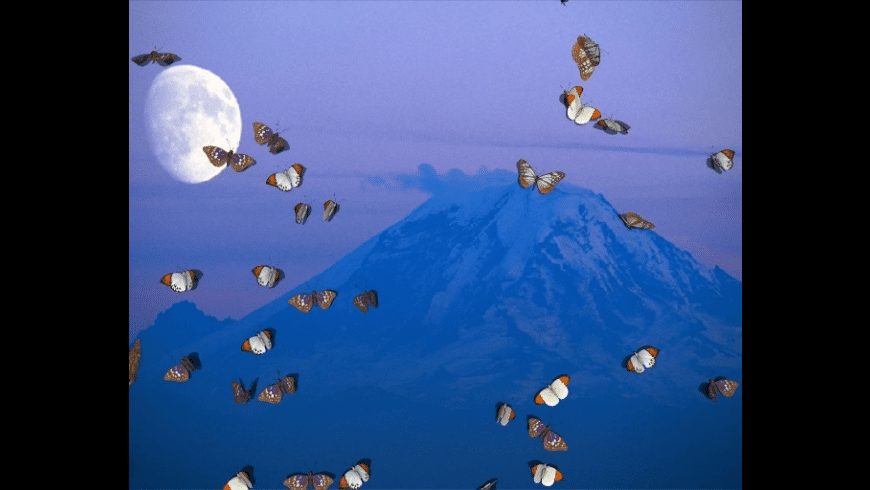 3D Desktop Butterfly Screen Saver for Mac - review, screenshots