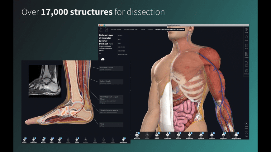Complete Anatomy 2020 for Mac - review, screenshots