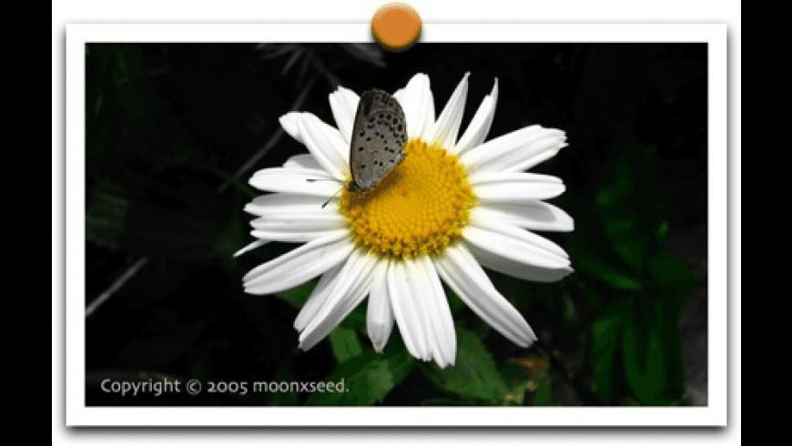 Decor for Mac - review, screenshots