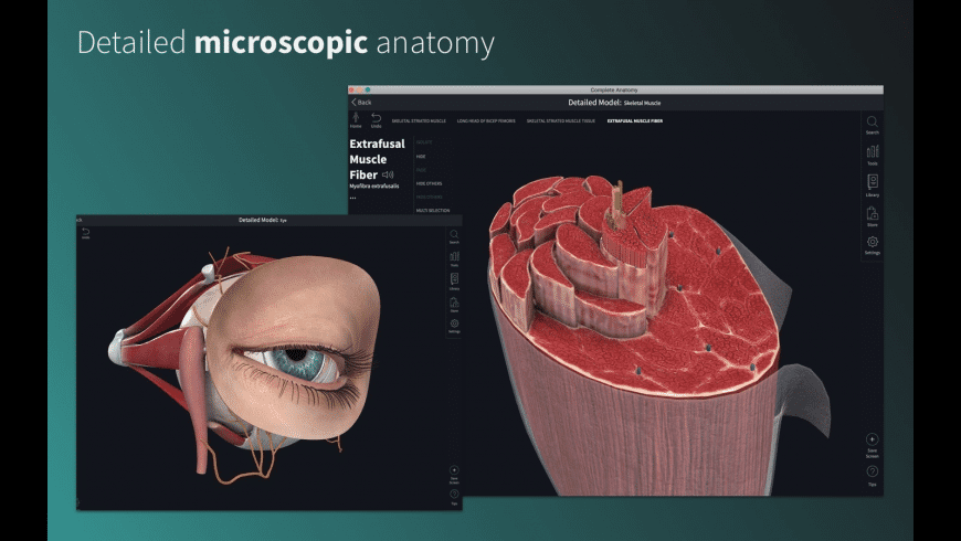 Complete Anatomy for Mac - review, screenshots