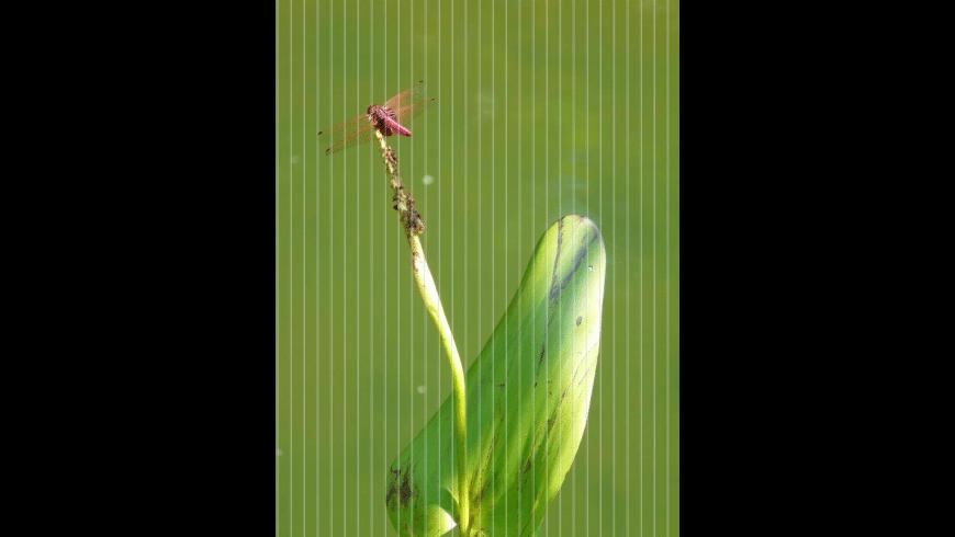 PhotoX for Mac - review, screenshots