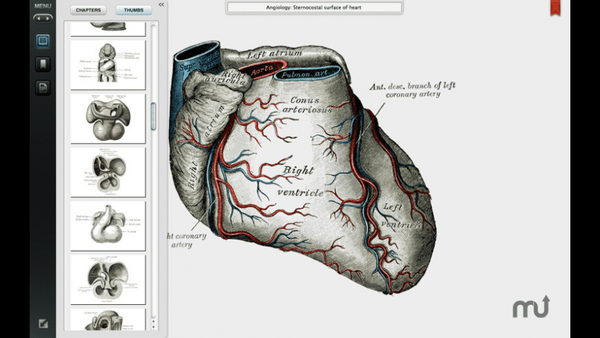 Grays Anatomy Student Edition for Mac - review, screenshots