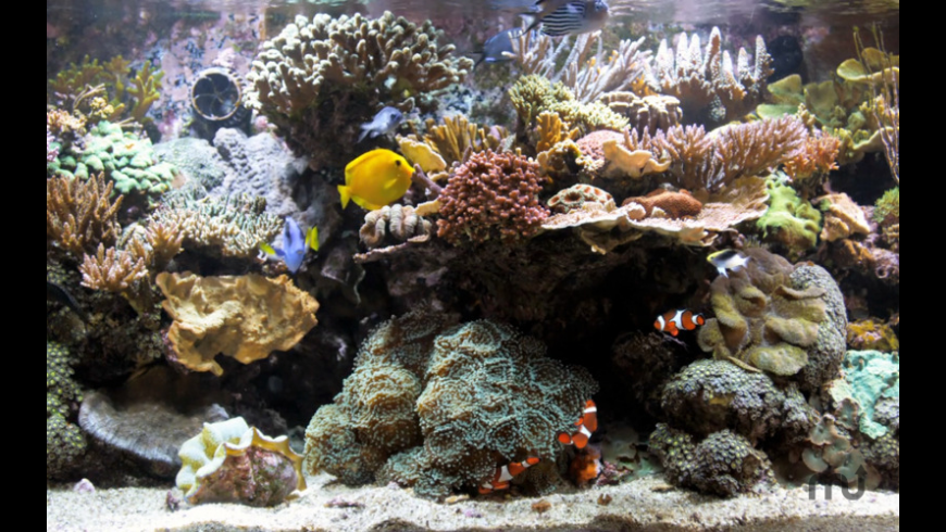 Coral Reef Aquarium for Mac - review, screenshots