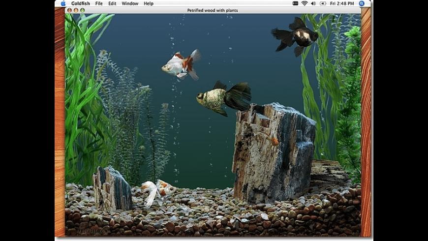 Goldfish Aquarium for Mac - review, screenshots