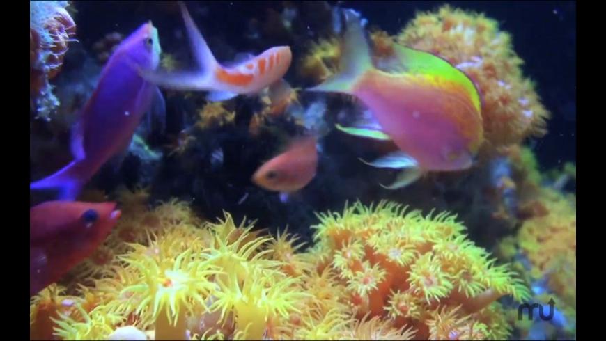 Fish Tank HD for Mac - review, screenshots