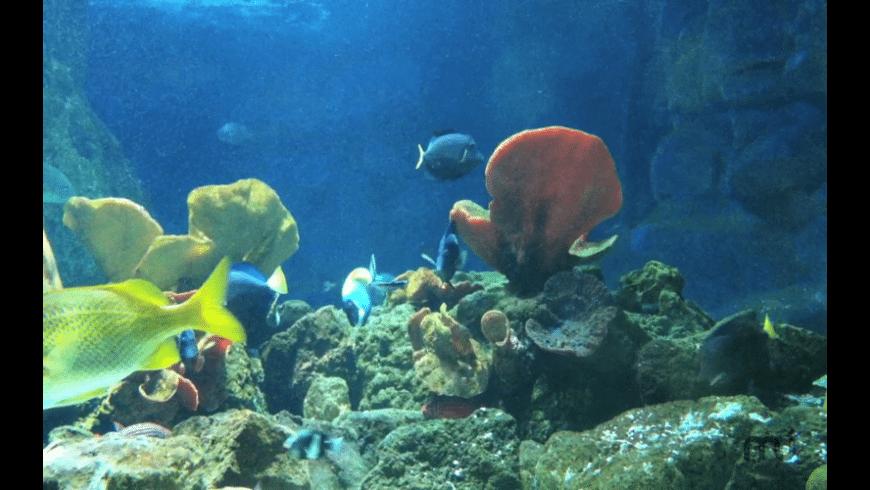 Virtual Aquarium for Mac - review, screenshots