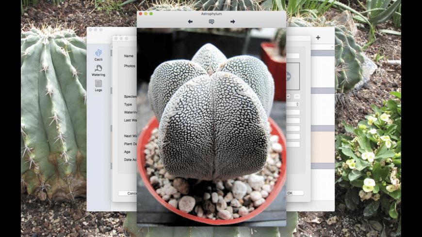 Cactus Album for Mac - review, screenshots