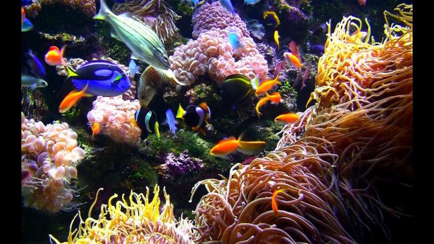 Aquarium Live HD screensaver for Mac - review, screenshots
