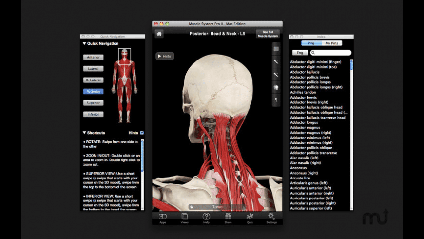 Muscle System Pro III for Mac - review, screenshots