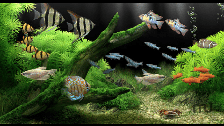 Dream Aquarium for Mac - review, screenshots