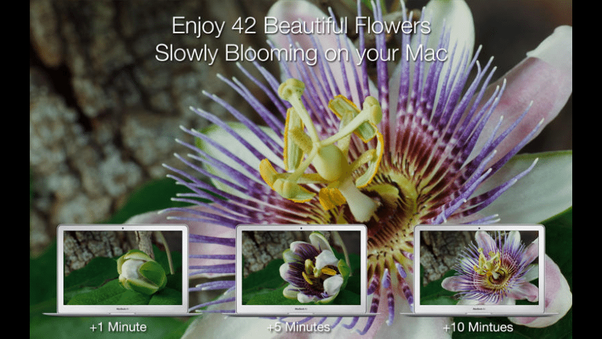 Magic Flowers for Mac - review, screenshots