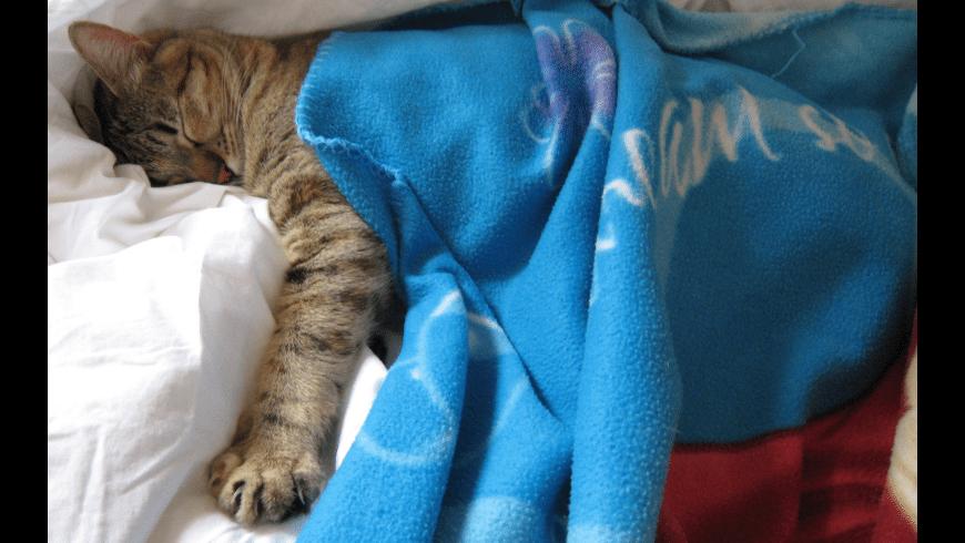 CatsScreenSaver for Mac - review, screenshots