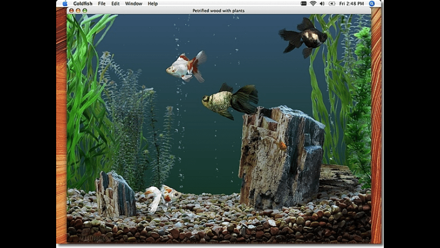 Goldfish Aquarium for Mac - review, screenshots